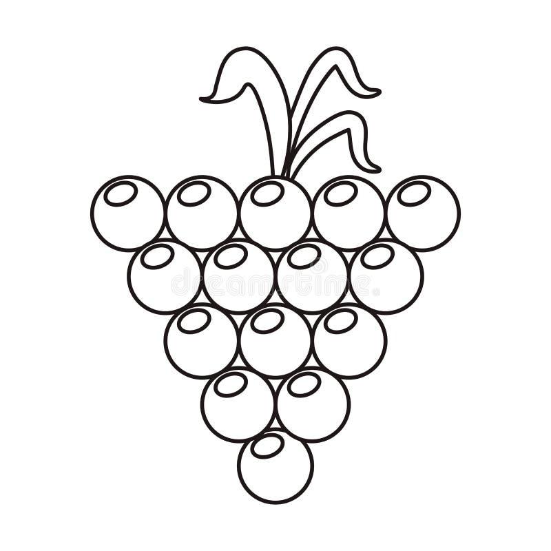 Esquema orgánico crecido uva de la naturaleza de la fruta libre illustration