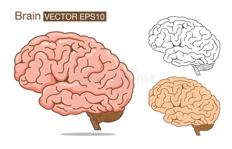 Esquema y color del vector del cerebro encendido stock de ilustración
