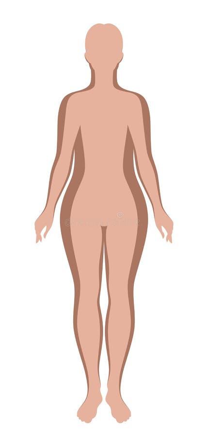Esquemas femeninos gruesos y finos ilustración del vector