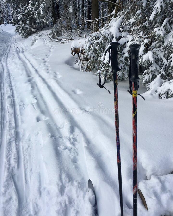 esqui corta-mato no parque nacional bonito Harz em Alemanha, foto de stock royalty free