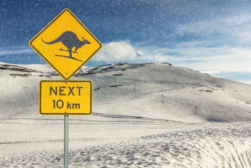 Esqui de advertência do canguru imagem de stock