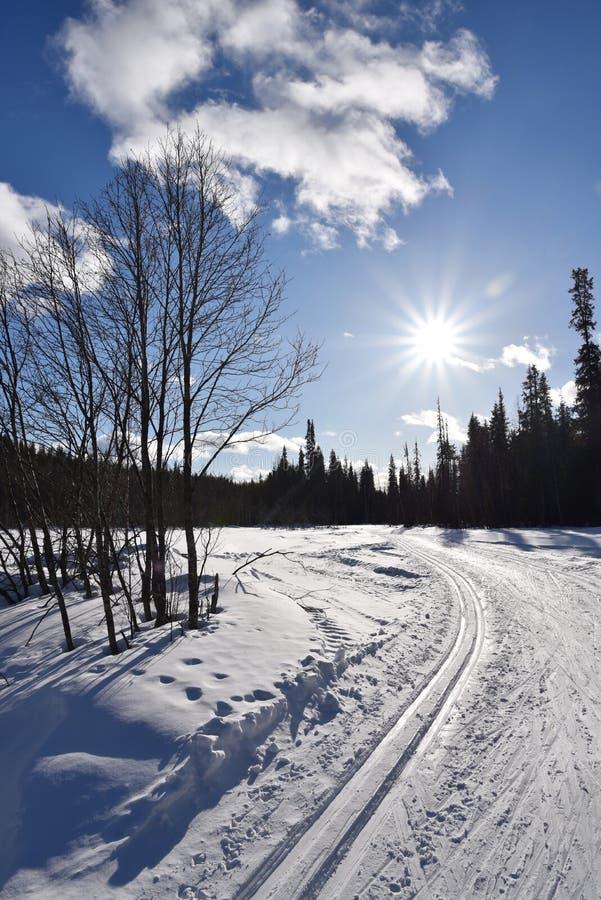 Esqui do corta-mato em Lapland imagens de stock royalty free