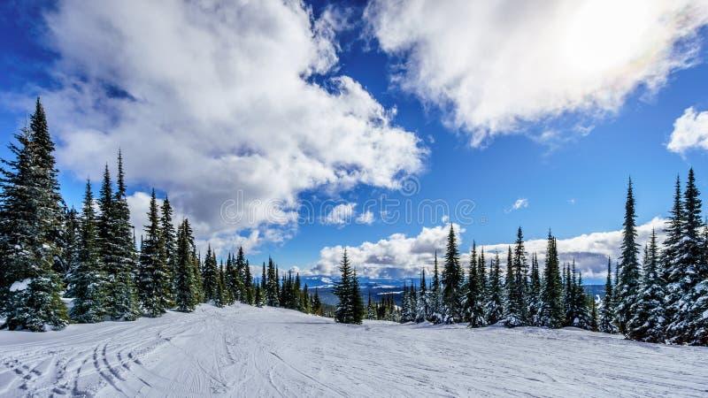 Esqui entre árvores cobertos de neve sob céus azuis imagens de stock
