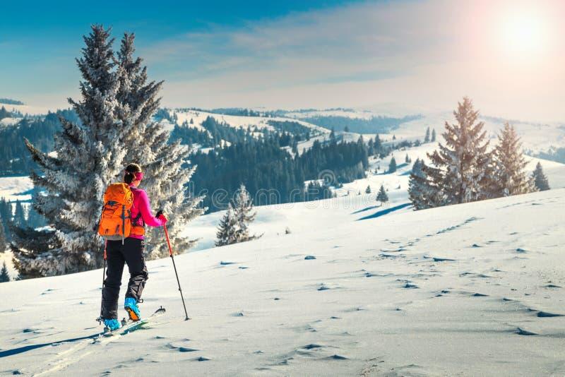 Esqui que visita nos montes, a Transilvânia, Carpathians, Romênia, Europa imagens de stock