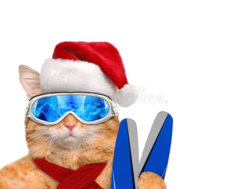Esquiador do gato no chapéu vermelho do Natal foto de stock royalty free