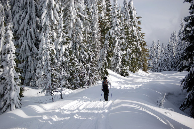 Esquiador do país transversal imagens de stock