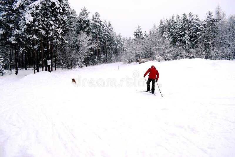 Esquiador em um revestimento vermelho com um cão running no fundo da floresta foto de stock