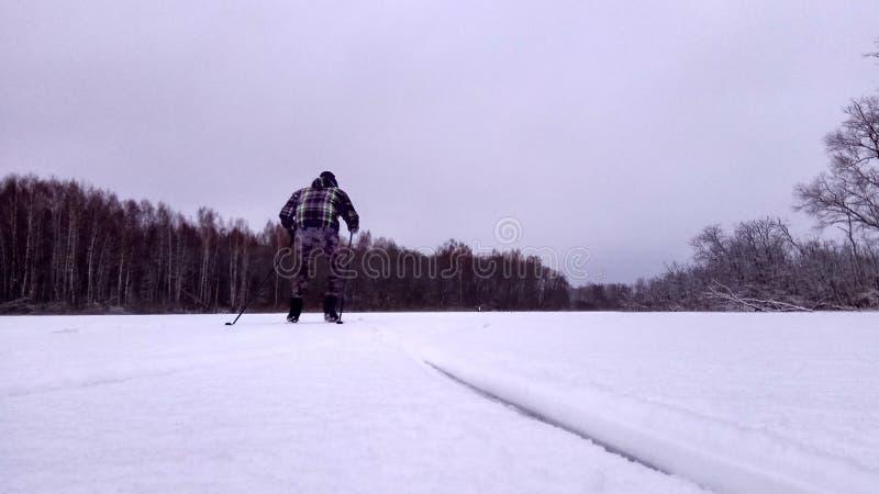 Esquiador em uma estrada do inverno em um fundo nevado do papel de parede da floresta do pinho fotografia de stock royalty free