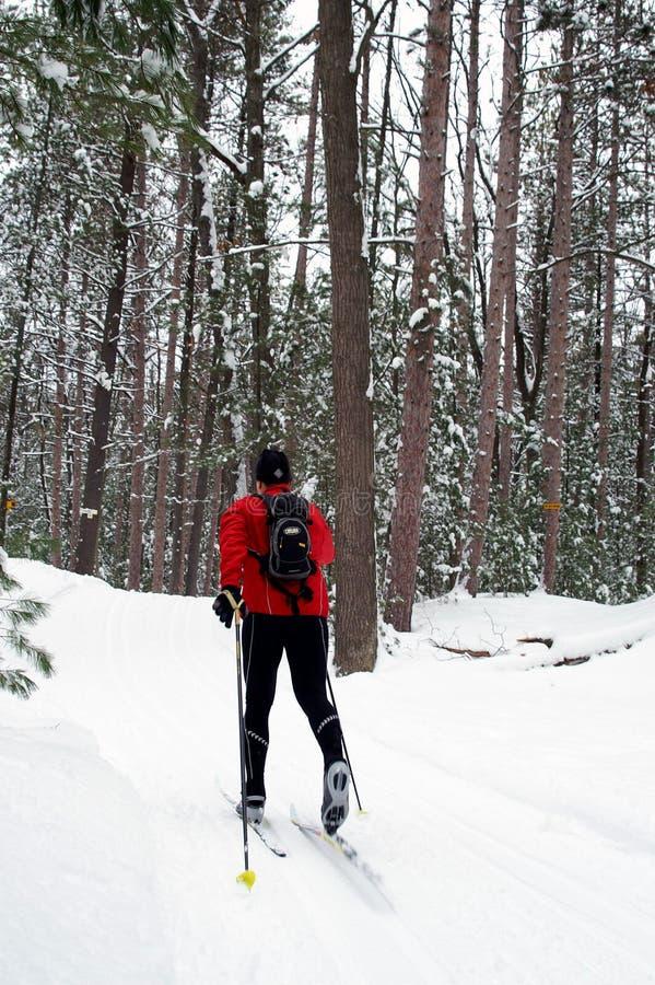 Esquiador nórdico na floresta do pinho foto de stock