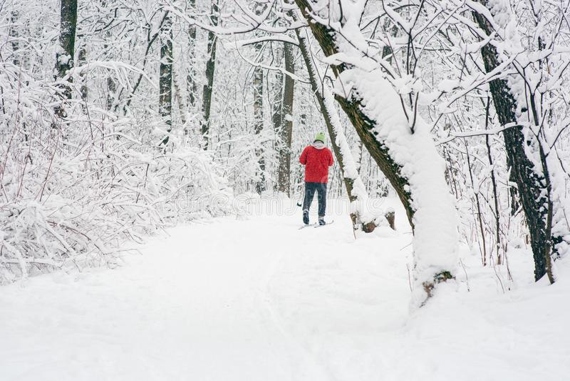 Esquiador solitario en el bosque imagenes de archivo
