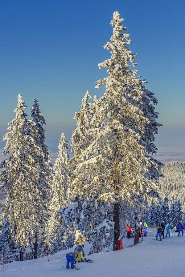 Esquiadores en funcionamientos de esquí, Poiana Brasov, Rumania imágenes de archivo libres de regalías