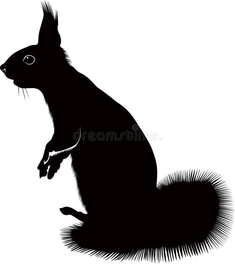 Esquilo animal
