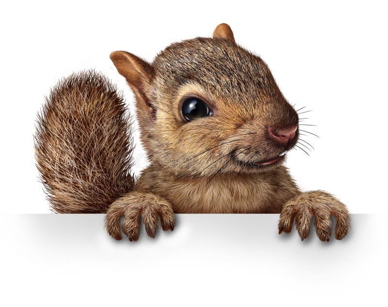 Esquilo bonito ilustração do vetor