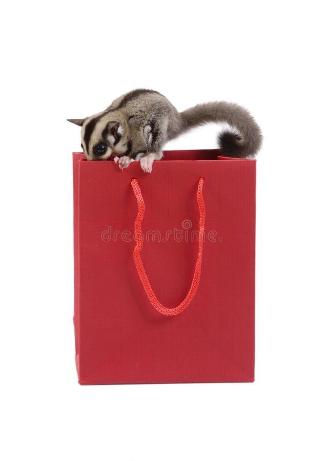 Esquilo de voo bonito e pouco saco de compras vermelho fotografia de stock