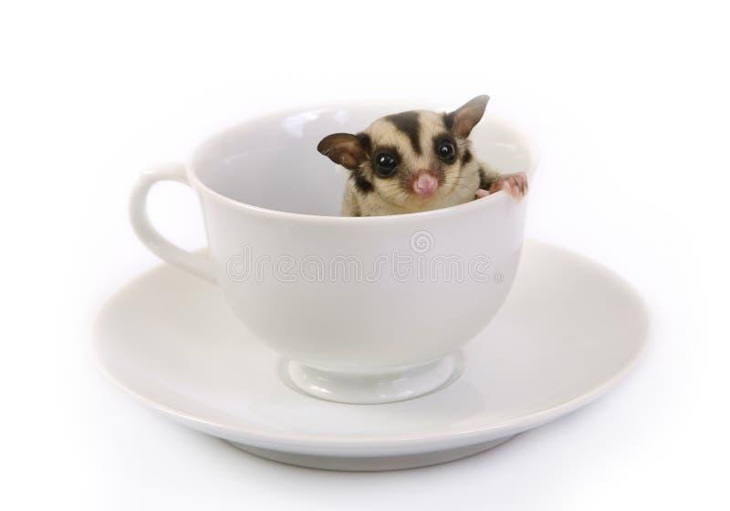 Esquilo de voo pequeno no copo cerâmico branco fotografia de stock royalty free
