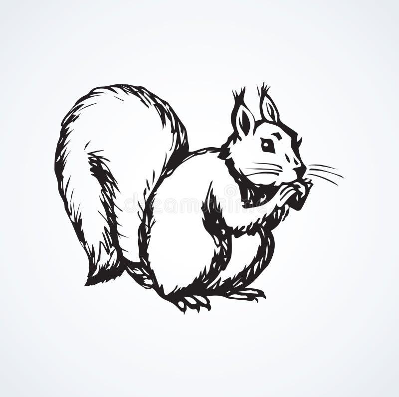 esquilo Desenho do vetor ilustração royalty free