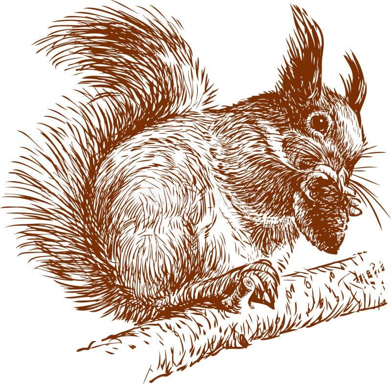 Esquilo em um ramo ilustração do vetor