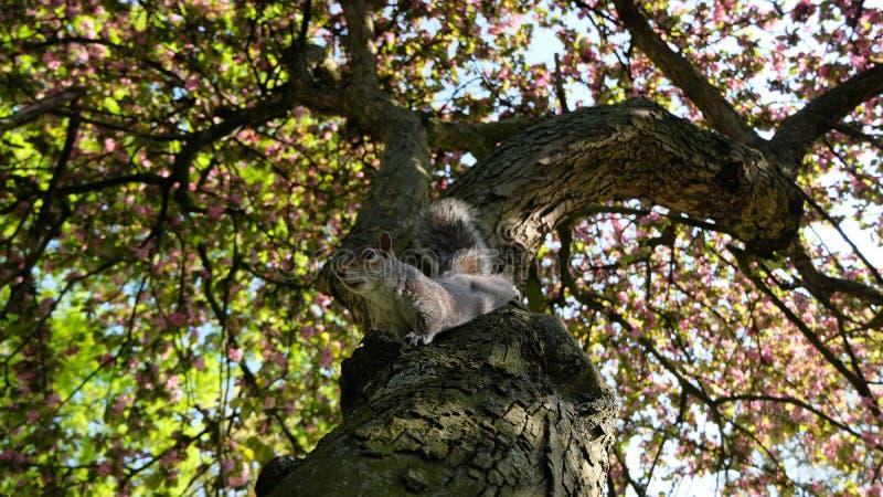 Esquilo em uma ?rvore foto de stock