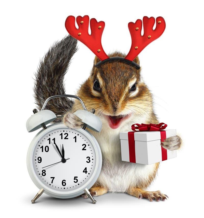 Esquilo engraçado com os chifres da caixa de presente e dos cervos do Natal no branco foto de stock royalty free