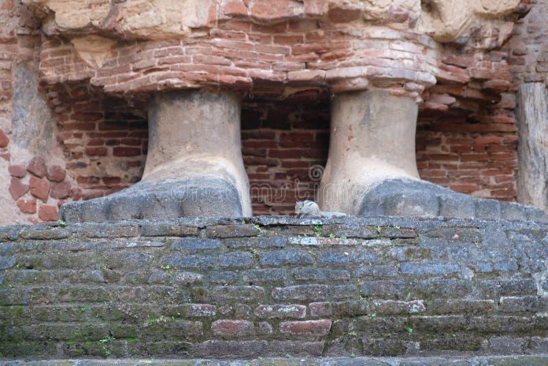 Esquilo nos pés da Buda fotografia de stock royalty free