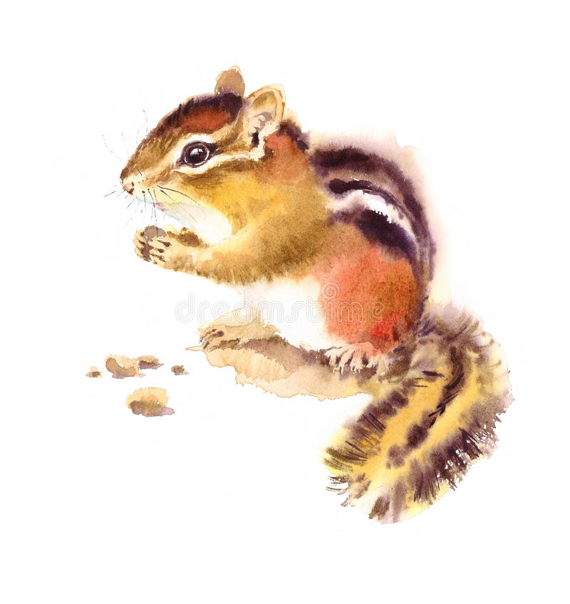 Esquilo que come a ilustração Nuts dos animais selvagens da aquarela pintado à mão