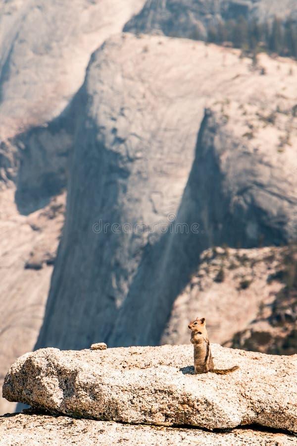 Esquilo que está no penhasco em Yosemite fotografia de stock