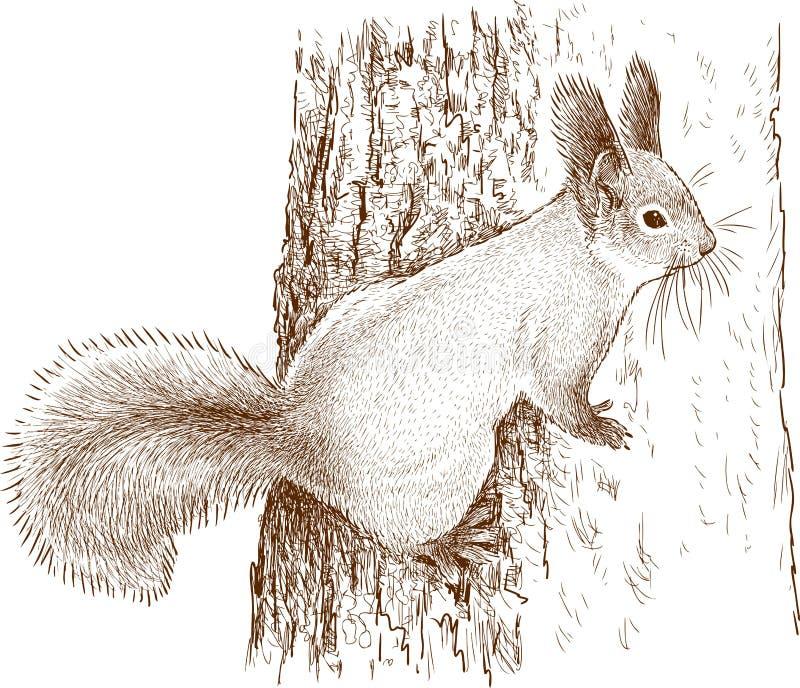 Esquilo selvagem em uma árvore ilustração stock