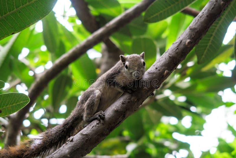 Esquilos na árvore fotografia de stock royalty free