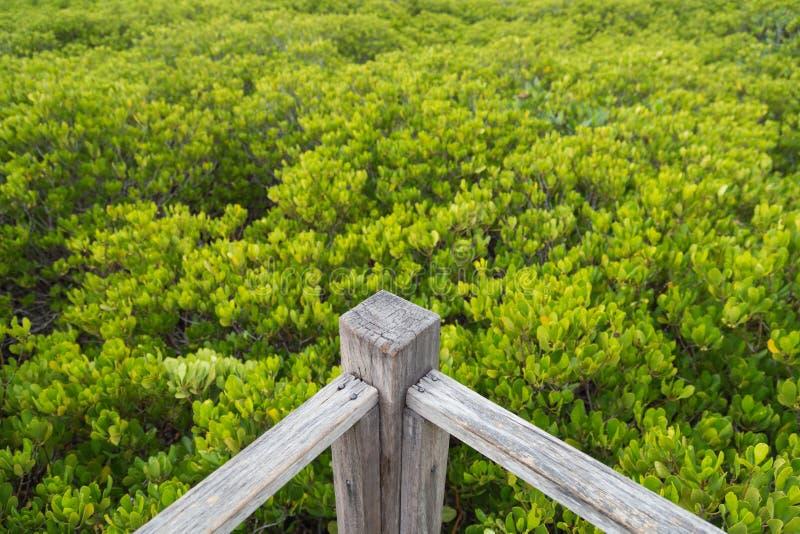 Esquina de la calzada del puente de madera en bosque del mangle fotografía de archivo libre de regalías