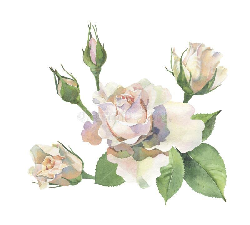 Esquina de rosas en un fondo blanco stock de ilustración