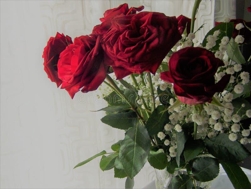 Esquina de rosas rojas foto de archivo