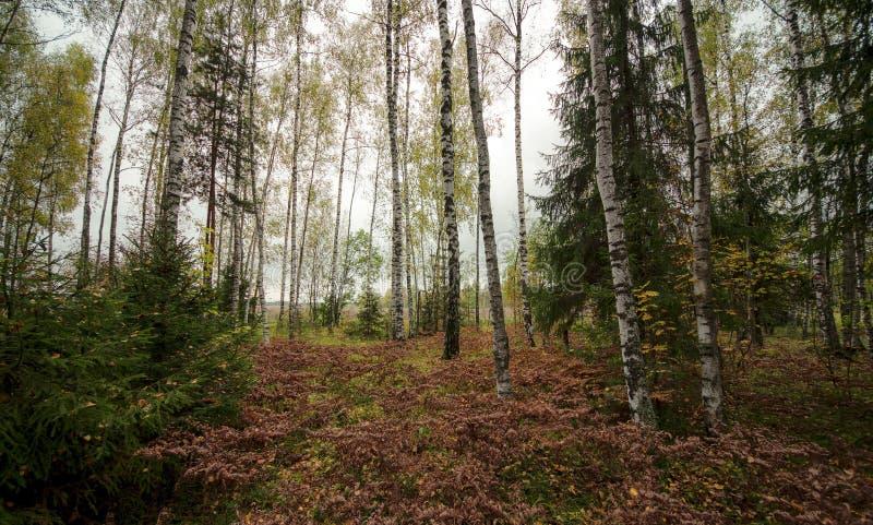 Esquina del bosque imágenes de archivo libres de regalías