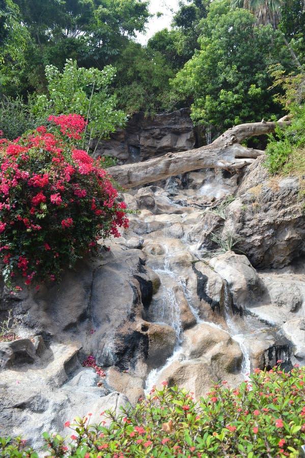 Esquina hermosa de la naturaleza salvaje con las flores y la cascada foto de archivo