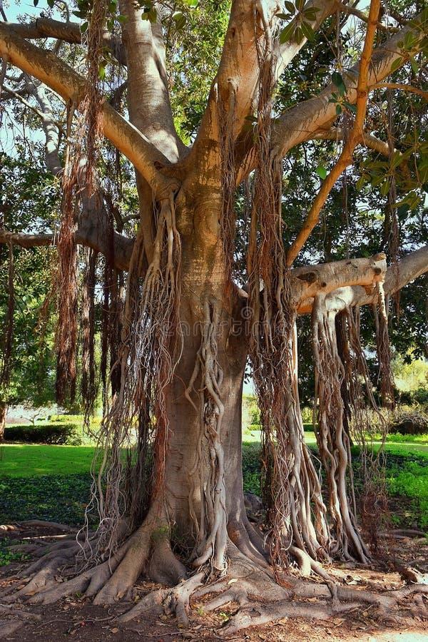 Esquina pintoresca en el parque Ramat Hanadiv, Israel foto de archivo libre de regalías