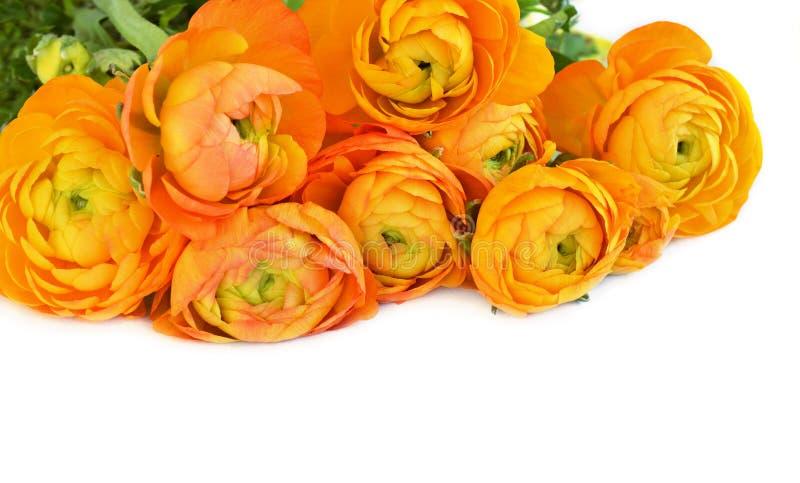 Esquina superior floral con las flores anaranjadas del ranúnculo imagenes de archivo