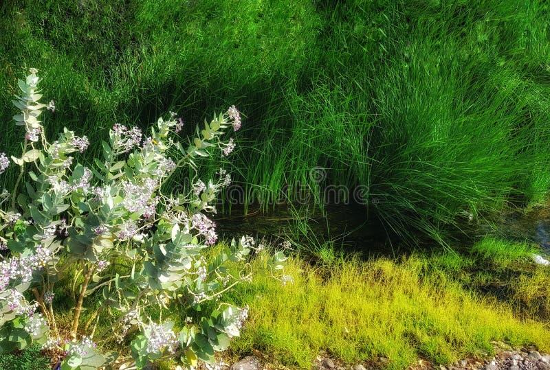 Esquina verde en el medio del camino fotografía de archivo libre de regalías