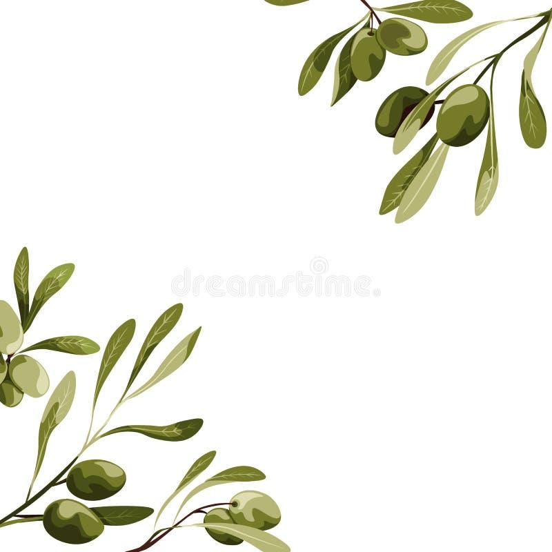 Esquinas del vector con la decoración del olivo Ejemplo de la comida del vegano stock de ilustración