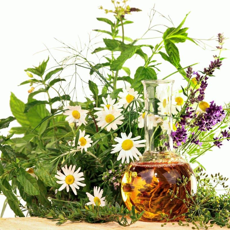 Essência com plantas médicas e as ervas frescas fotografia de stock