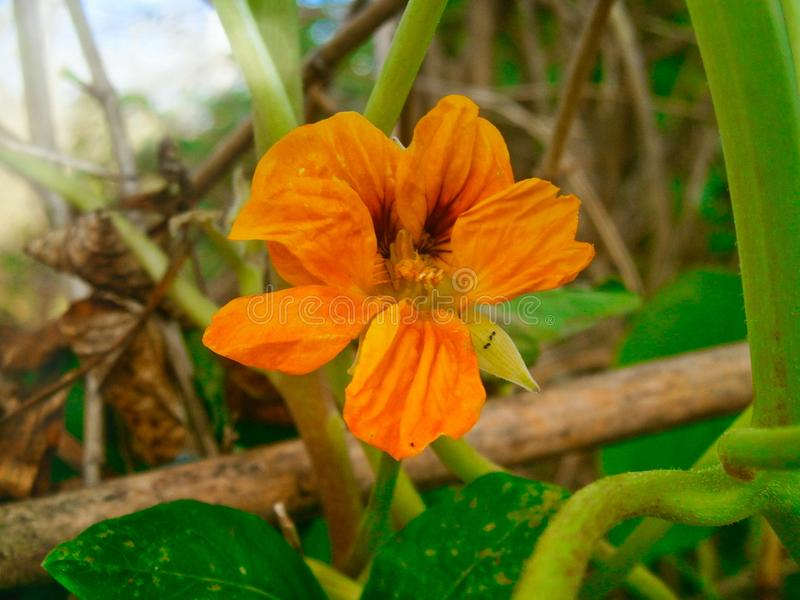 Essência - Sunny Day Flower fotos de stock royalty free