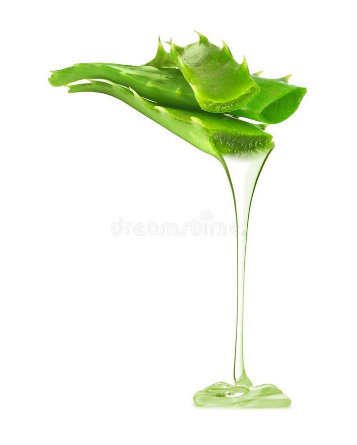 A essência transparente da planta de vera do aloés goteja das folhas fotografia de stock royalty free