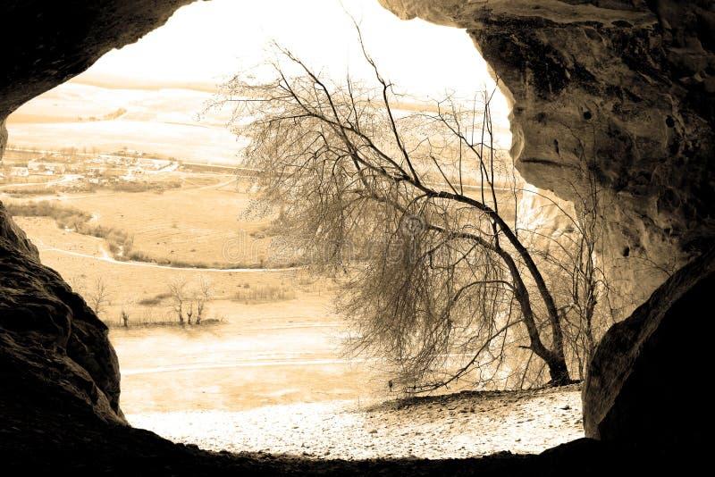 Árvore em uma caverna fotos de stock royalty free