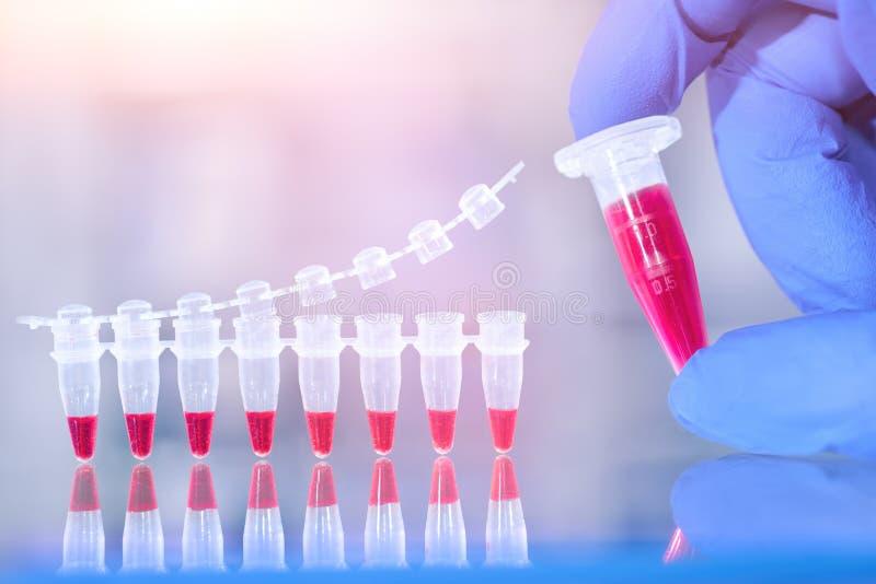 Essai d'amplification d'ADN et mélange de la réaction dans la main enfilée de gants, scie photographie stock
