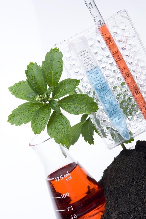 Essai-Tube de plante et de produit chimique photos stock