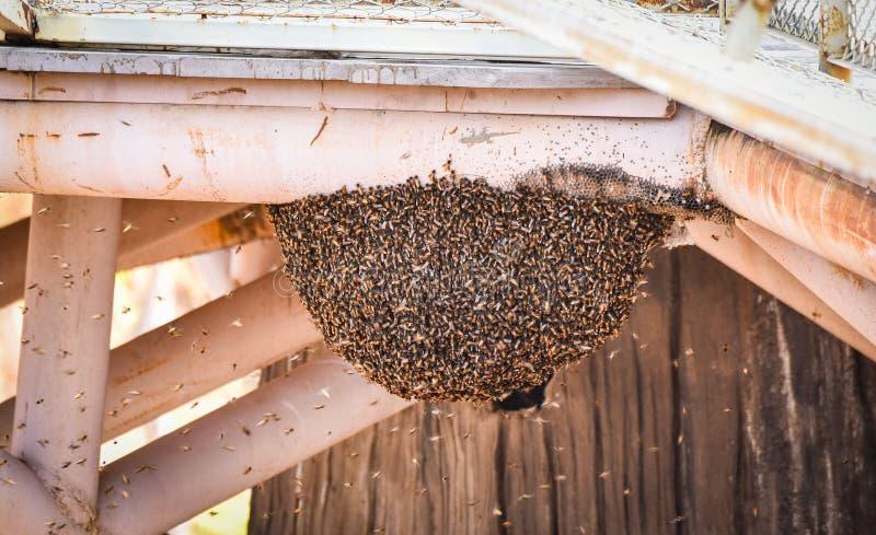 Essaim d'abeille de miel photos libres de droits