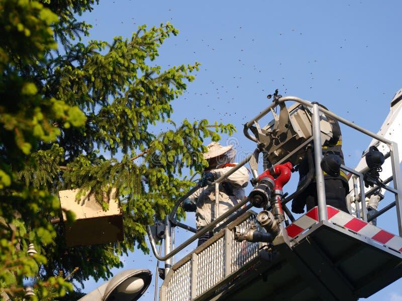 Essaim d'abeille et sapeurs-pompiers images libres de droits