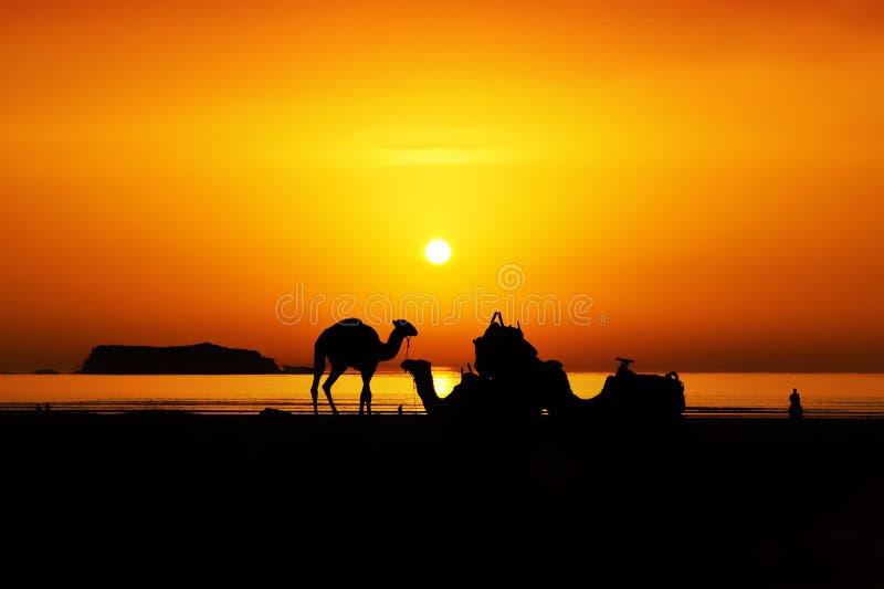 Essaouira beach. The peacefull beach of Essaouira. magic sunset in the sand stock image