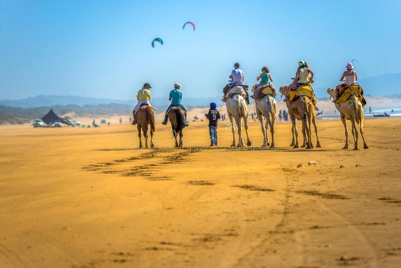 Several tourists ride horses and camels at the Moroccan seaside. royalty free stock photos
