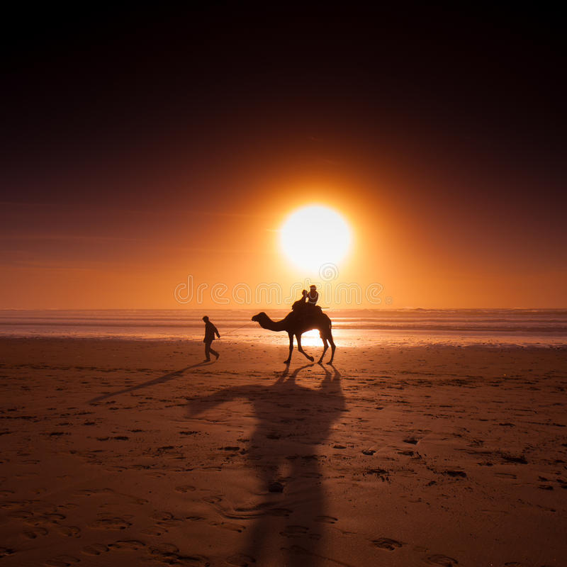 Essaouira - Sidi Kaouki. Sidi Kaouki is a small town and rural commune in Essaouira Province - Morocco; the perfect place for a camel ride on the lonely beach stock photography
