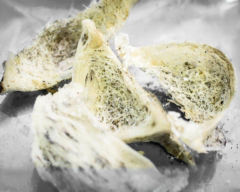 Essbar-Nest swiftlet stockbilder