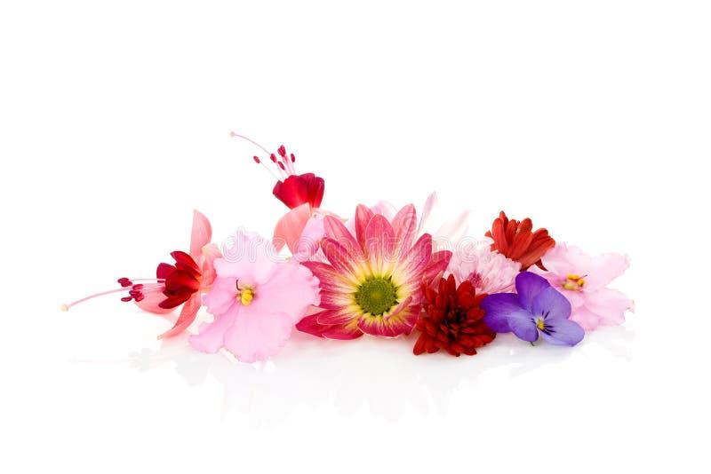 Essbare Blumen getrennt stockfoto